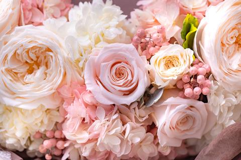 flower420153_TP_V