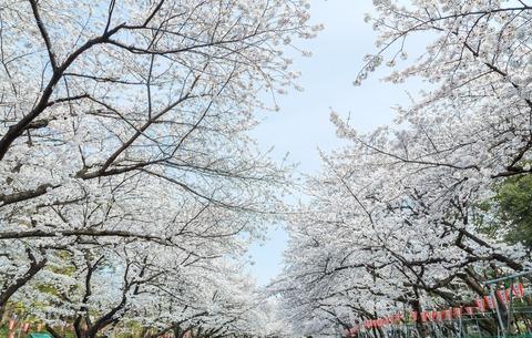 JS721_uenonosakura_TP_V
