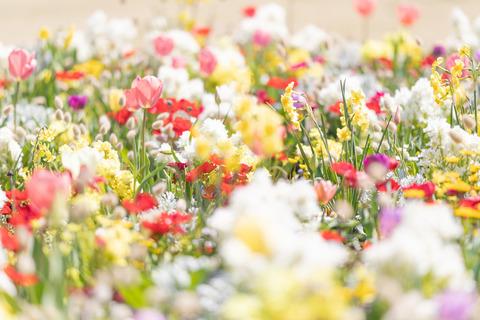 spring201943FTHG7177_TP_V