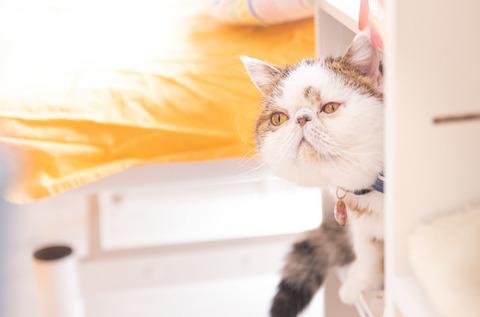cat458A8423_TP_V