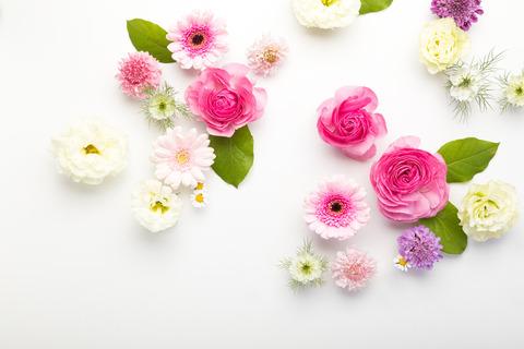 flower201261772_TP_V