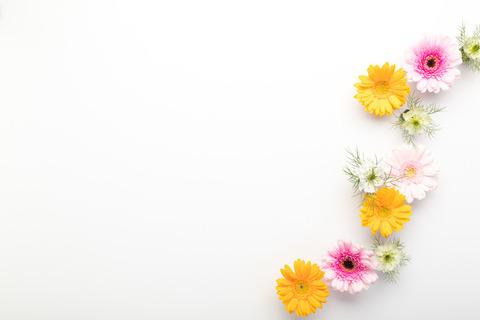 flower201261773_TP_V