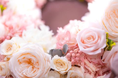 flower420151_TP_V