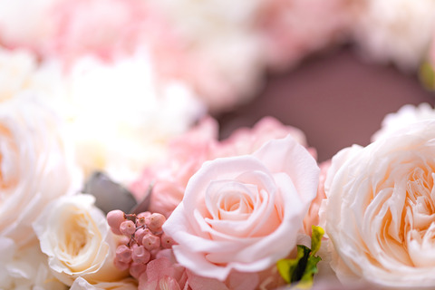flower420150_TP_V