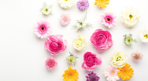 flower201261779_TP_V