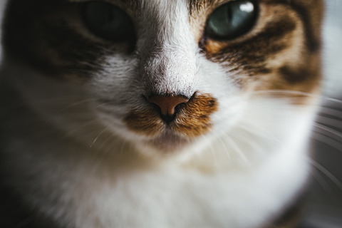 tomcat1579_TP_V