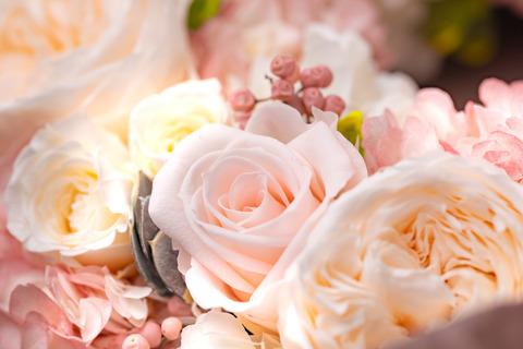 flower420158_TP_V