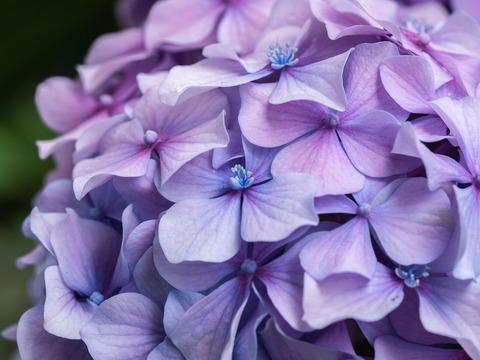 flower-4375950_1280
