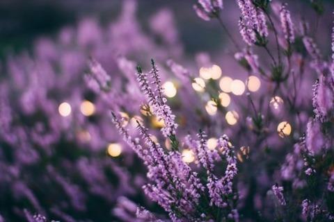 blooming-floral-flower