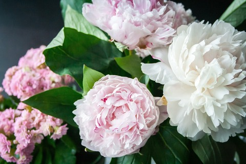 flower-823655_1280