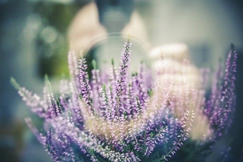 lavender-1461298_1280
