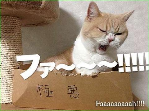 【画像】猫の変顔が可愛すぎる!!