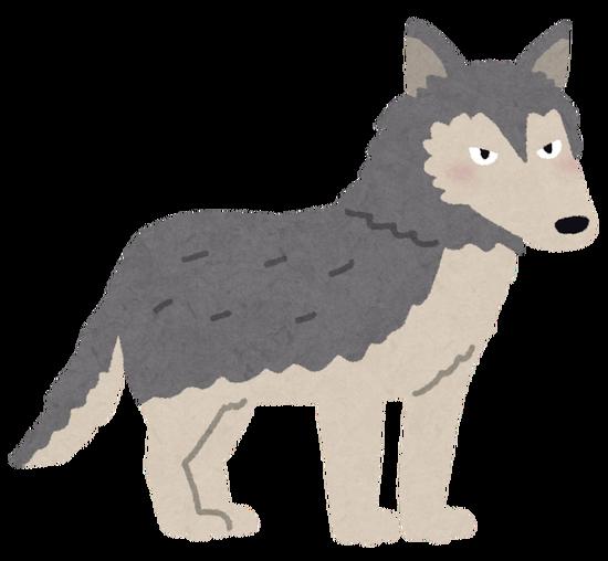 【動画】オオカミの多彩な食生活、研究者も驚く!高い知能と文化をもつ可能性wwwwwww