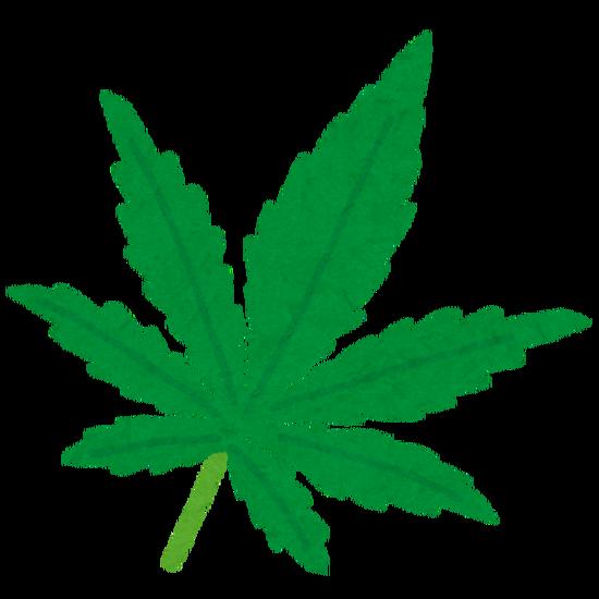住宅で大麻(鉢植え40個)を栽培した韓国籍の男らを逮捕、営利目的とみて取調中・・・