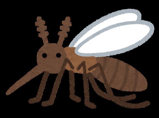 ブラジル人、野生の蚊を進化させてしまうwwwwwwwwww