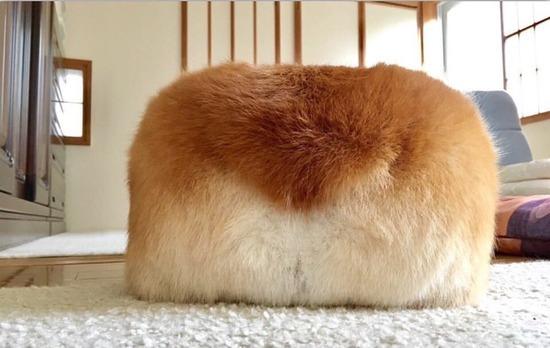 【画像】コーギーのお尻、ほぼパンと同じだったwwwwwww