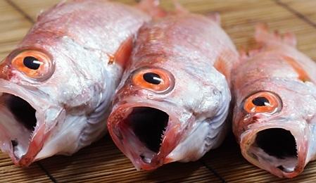 【画像】ノドグロって魚食べた結果wwwwww