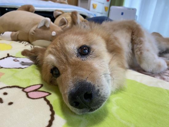 【画像】おれんちの16歳の老犬www