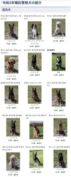 【画像】警察犬可愛すぎワロタwwwwww