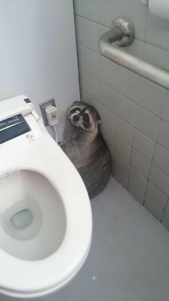 【画像】大学のトイレにタヌキおったwwww