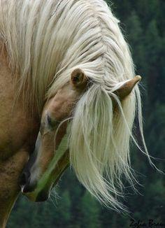 【悲報】馬のたてがみを転売した女の末路・・・・