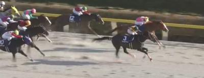 東京ダ1600mの傾向とフェブラリーS登録馬の東京ダート実績