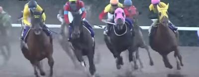 12月31日[高確馬(地方Ver)]大井競馬(8Rおおとり賞,10R東京2歳優駿牝馬,11R)