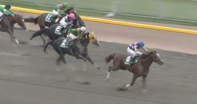 東京ダ1600mの傾向とユニコーンS登録馬の東京ダート実績