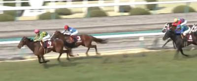 阪神芝3000mの傾向と阪神大賞典登録馬の阪神芝実績