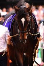 【競馬】 キタサンブラック 清水久師 「天皇賞・秋はたたき台じゃないので、万全で行きたい」