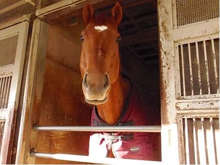 【競馬】史上最弱のNHKマイルC勝ち馬