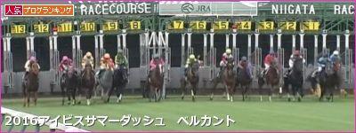 新潟芝1000m・直線の傾向と第17回アイビスサマーダッシュ登録馬の新潟芝実績