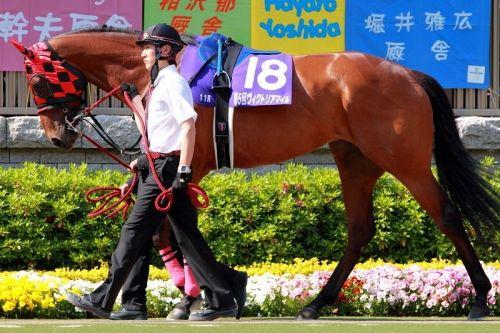 【競馬ネタ】部長「好きな馬は?」新入社員「プロヴィナージュです」