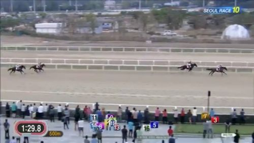 【競馬引退】第1回コリアカップの勝ち馬クリソライト引退、韓国で種牡馬に