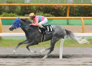 【競馬】 テイエムジンソク屈腱炎発症 全治9ヶ月以上