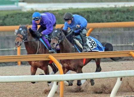【凱旋門賞】素直に応援できる日本馬って非良血、弱小牧場