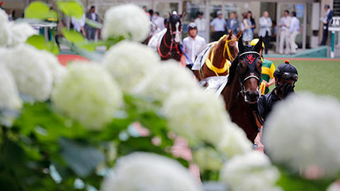 【宝塚記念】地震の影響により宝塚中止になるだろ??競馬なんて開催してる場合じゃないよな