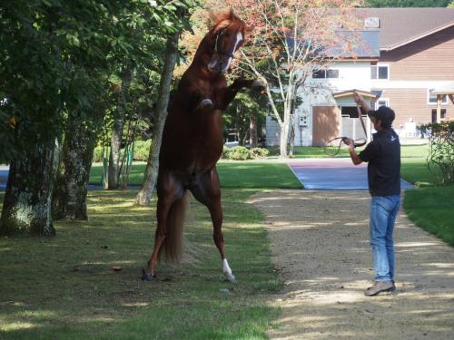 【競馬ネタ】オルフェーヴルがついに2足歩行を始めた件