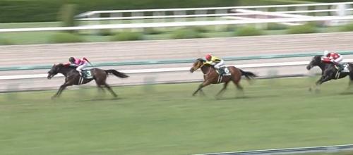 小倉芝1200mの傾向とCBC賞登録馬の小倉芝実績