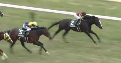 東京芝1600mの傾向と東京新聞杯登録馬の東京芝実績