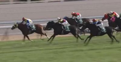京都芝1600m・外の傾向と京都金杯登録馬の京都芝実績