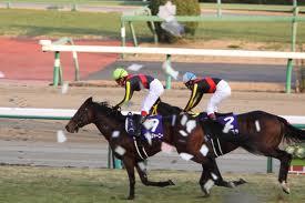 【競馬】 平均年齢54.5歳、競馬ファンが高齢化! レッド吉田「今はスターホースがいない」