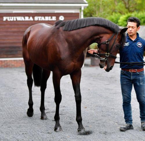 【競馬】エポカドーロがあんまり人気がない理由wwww