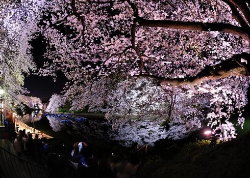 千鳥ヶ淵の夜桜 2014