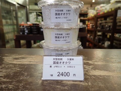 大型久留米