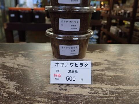 オキナワヒラタ