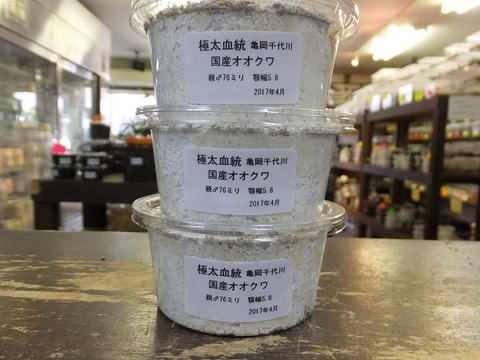 千代川極太