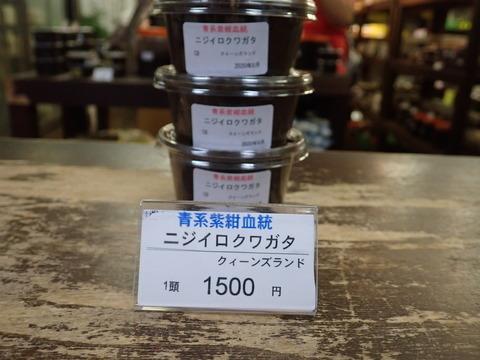 青系紫紺ニジイロ