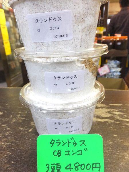 タランドゥス3頭4800円