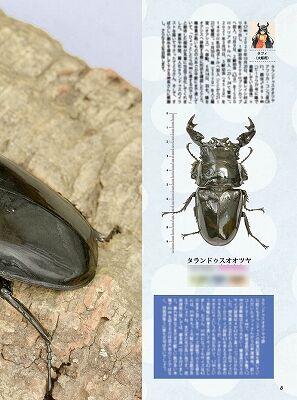 BE-KUWA-81-006-035